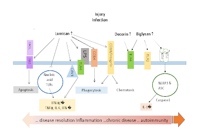 infection and inflammation